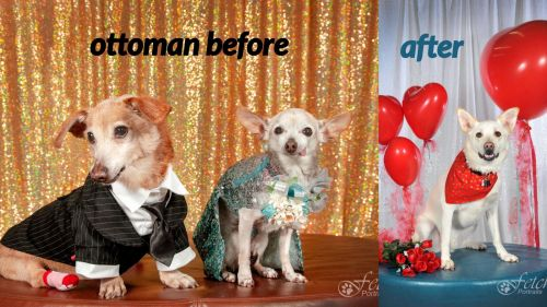 Small dogs standing on a recolored ottomon, before and after.